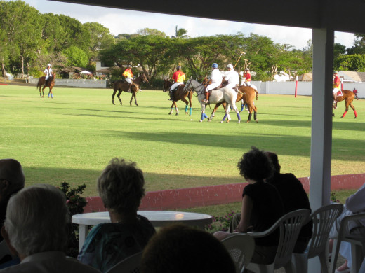 Polo at Holders House