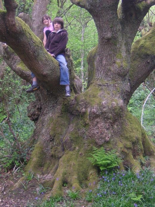 The best climbing tree!