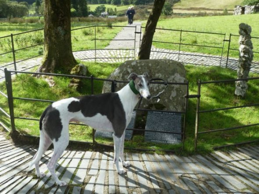 A Handsome Hound Pays His Respects At Gelerts Grave