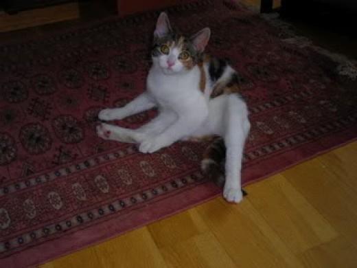 That's me on said Persian carpet