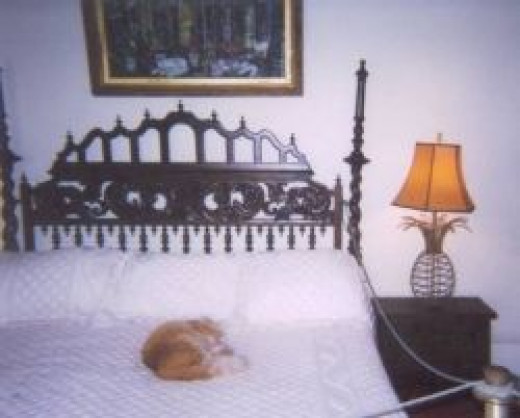 Cat napping on Hemingway's bed
