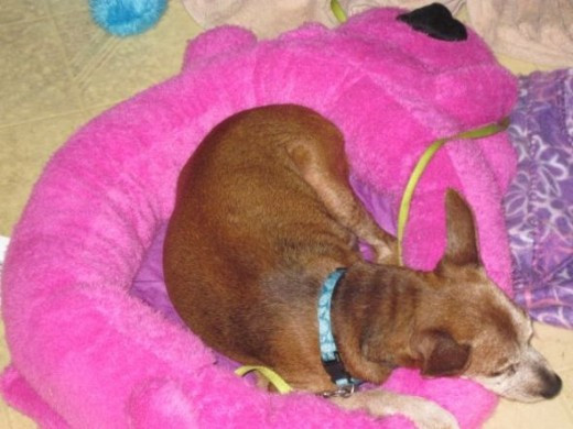 Loofa dog bed in magenta or pink