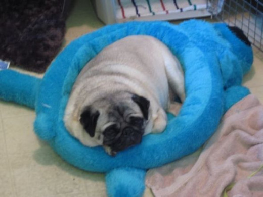 Loofa dog bed in blue or turquoise