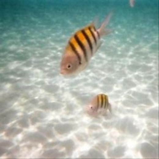 photo: my own, taken while snorkeling off Eleuthera