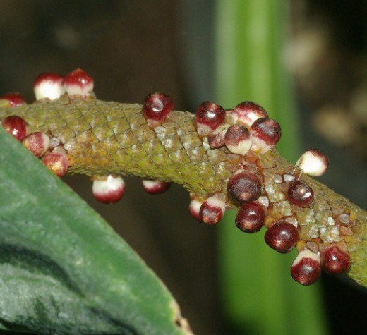 Eggs of the Atlas Moth. The Atlas Moth is too large for a Lens about tiny things. :)
