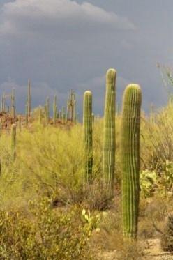Wild Desert Garden