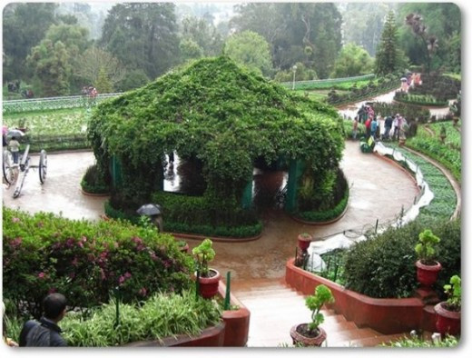 Botanical Gardens - Ooty