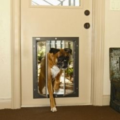 Why You Should Buy an Insulated Dog Door