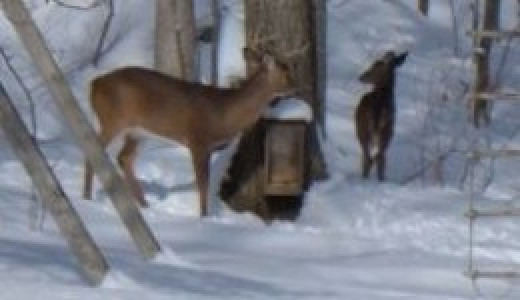 Deer Feeder Box in Winter