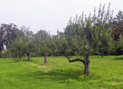 Montgomery Place Orchard