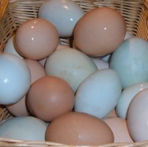 Homegrown Chicken Eggs are the best!