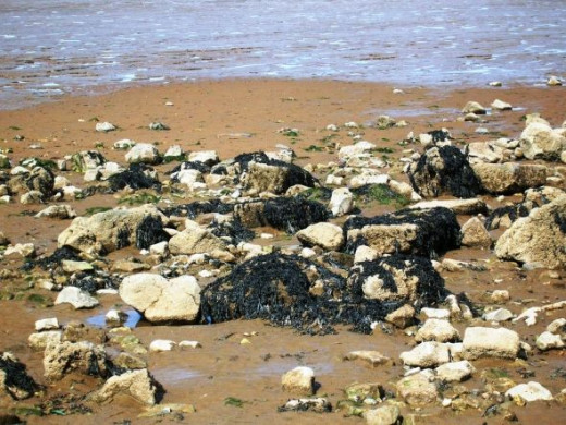 These are Cleethorpes answer to rock pools. I searched in vain for crabs and anenomes but found only dead crabs. My guess is they had burrowed into the soft sand to escape the baking sun and the gathering gulls.