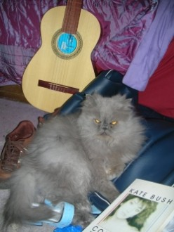 How To Change Guitar Strings with Persian Cats