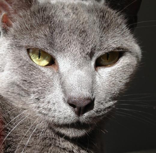 Yoshi, my most beloved feline.