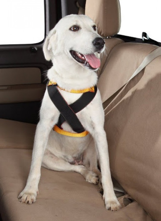 Ruff Rider Dog Harness Reviews