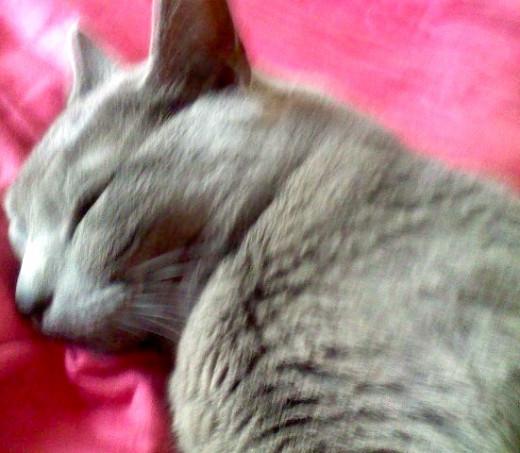 Yoshi resting on a silk bed sheet.