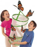 How to Raise a Caterpillar to a Butterfly or Moth
