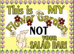 NOT your SALAD BAR