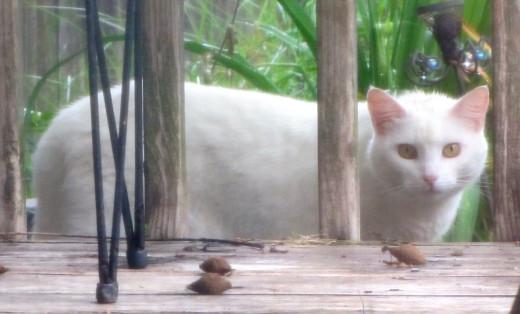 One beautiful, feral cat