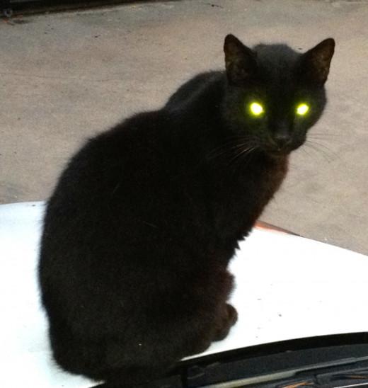 The black cat on my white car.