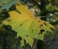 Nanaimo's Spectacular Fall Finery