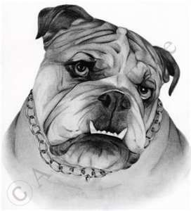 Bulldog drawing courtesy of photobucket.com