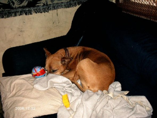 """Dixie has little stuffed toys that she chooses to have for a while.  We call them """"wubbies.""""  This one is a Superman Ball that she liked for a while."""