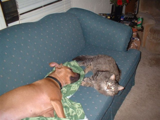 This is one of the first photos I took of Dixie and our cat.  Can you get any cuter?