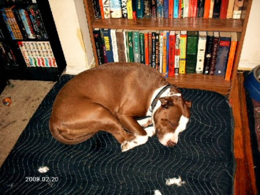 Here she's sleeping on the blankets that used to be in her kennel.  We wanted the space, so we removed the kennel.