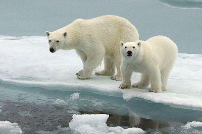 Bears belong on the ice