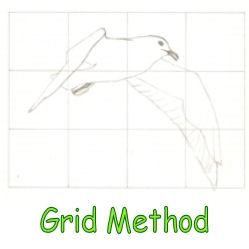 This is a drawing of a sea gull on an enlarged grid.
