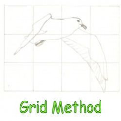 Grid Method Drawing Instructions; How to