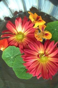 flower photo by euryale sinclair