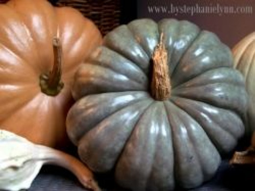 Polished Pumpkins and Gourds