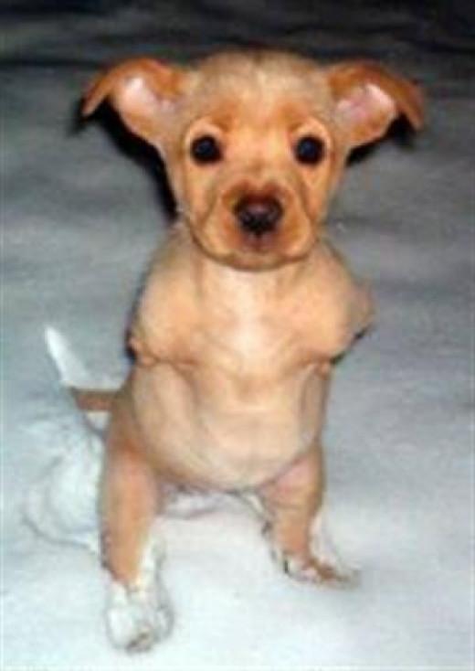 FAITH the dog was born on Christmas Eve 2002...