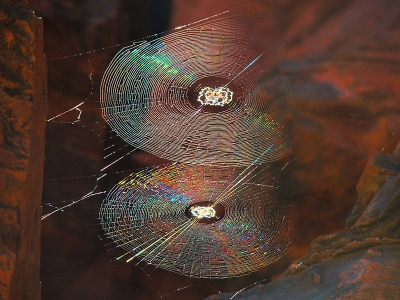 Spiral Orb Webs (by Bjrn Christian Trrissen on Wikipedia)