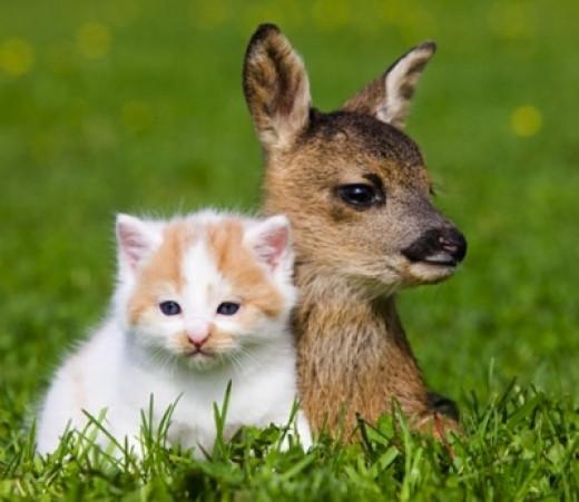 http://www.pinterest.com/nancymaggielee/natures-unique-animal-friendships/