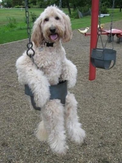 Dogs love the park but they can definitely pick up fleas there!