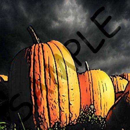 Pumpkin Patch at Night