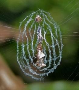 A designer spider web!