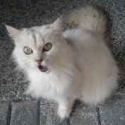 Hsin profile image