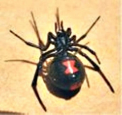 Black Widow Spider and Venom