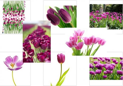 Purple Tulip Decals