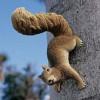Squirrel Garden Statues