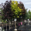 How to Plant and Grow a Tree
