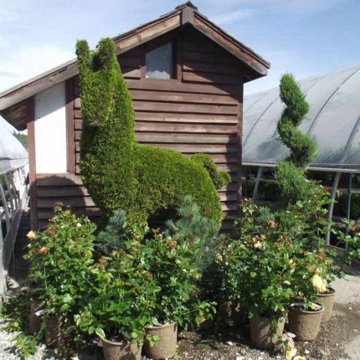 Some very different type of trees for sale at our local Top Crop garden center.