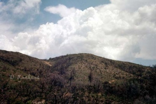 Storm clouds over eastern Heise park near Julian, CA.  Many of the trees in the photo had burned down in the 2003 Ceder fires.