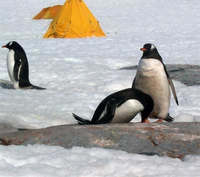 Penguins at a Scientific Research Camp