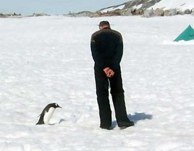 Tourist and Penguin Staring at Each Other