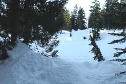 Snow Shoe Trail on Mount Seymour